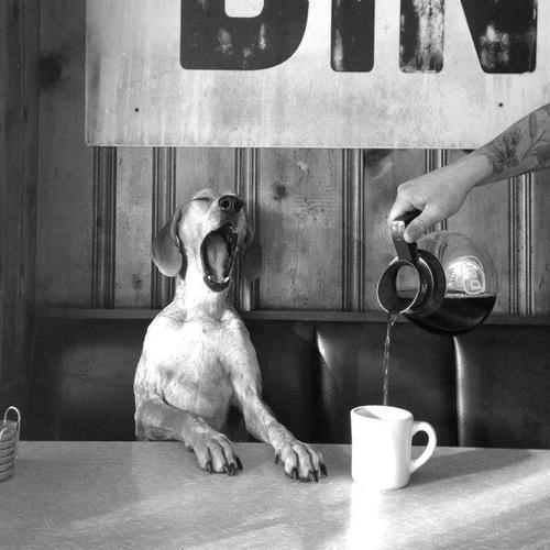 Coffee time for dog