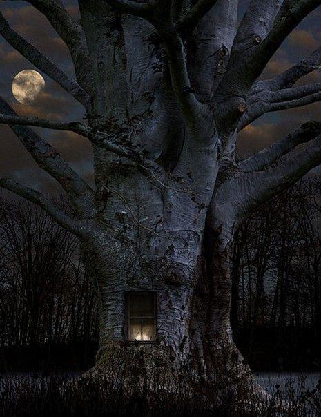beautiful tree under the moon