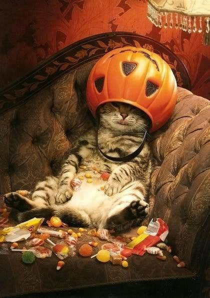 cat ate too much halloween candy