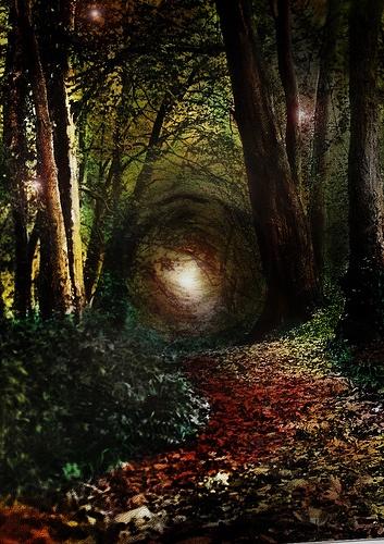 enchanted forest ireland
