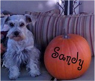 Sandy at Halloween