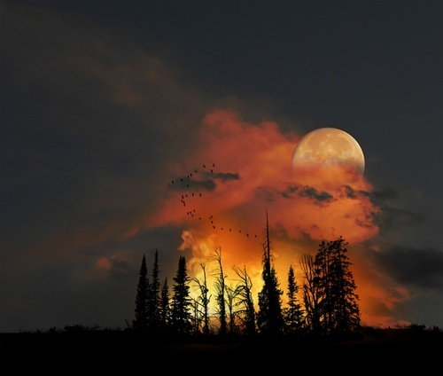 autumn moon and trees