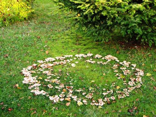 fairy circles
